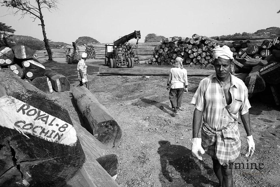 Dépot de bois exotique en provenance du Myanmar, Cochin, Inde