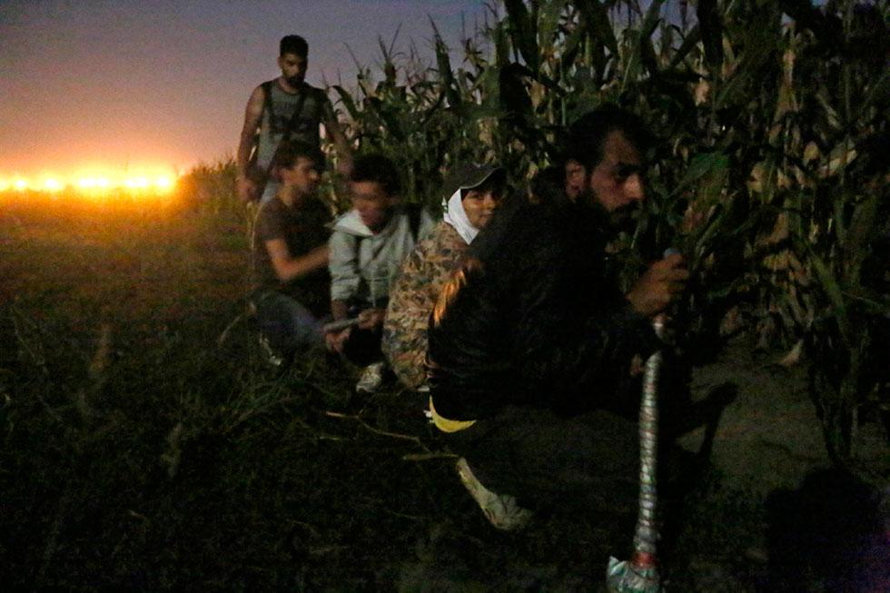 20H49 - Les Syriens guettent une patrouille de police serbe toute proche aux abords d'un champ de maïs séparant la Serbie de la Hongrie. Ils risquent la prison pour quelques jours s'ils sont découverts.
